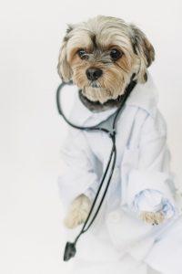 כלב לבוש במדי רופא